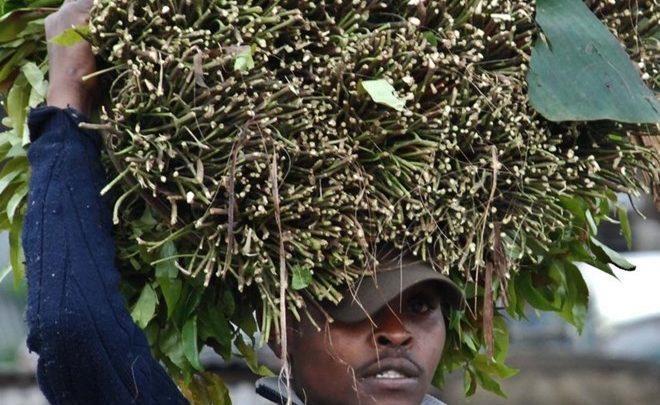 Kenya miraa traders vow to lose Somalia market