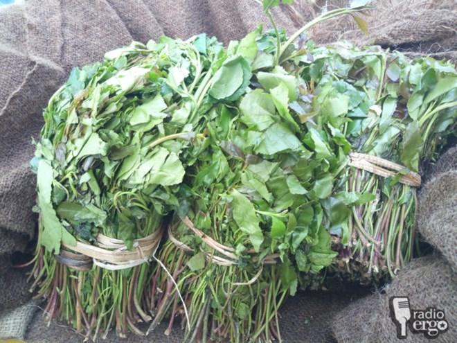Somali women in Sanag ban menfolk from chewing narcotic leaf khat